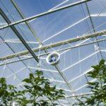fan_in_greenhouse